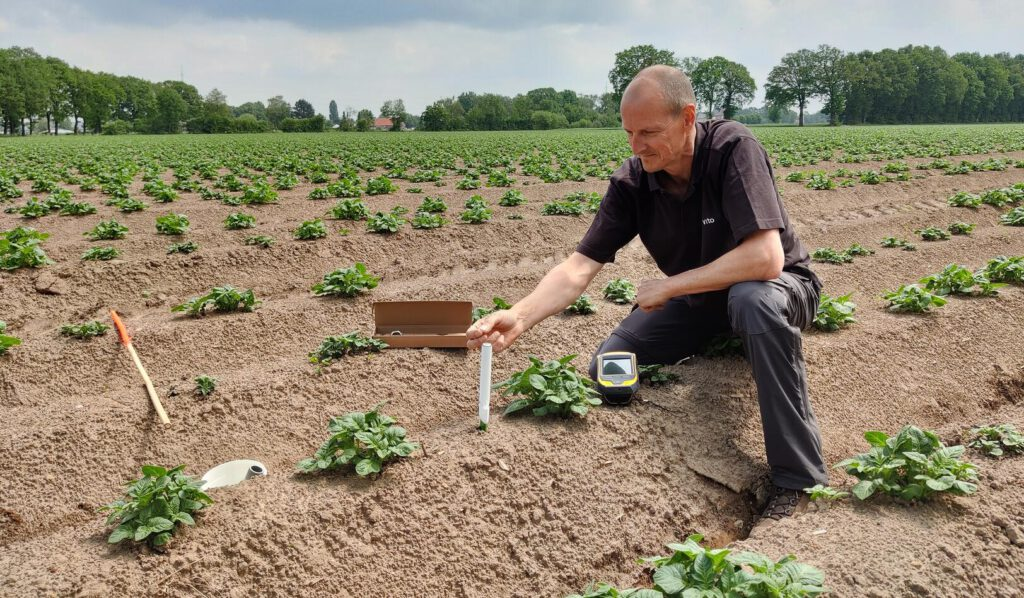 A Belgian project is gaining insight in potato crop development and quality during extreme weather conditions.